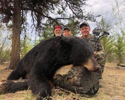19 archery bear