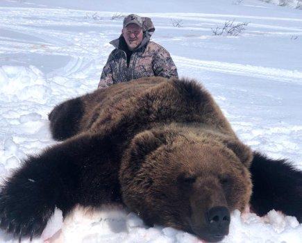 Schultz brown bear